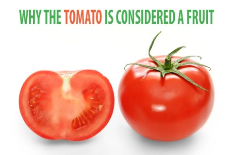tomato-fruit-vegetable